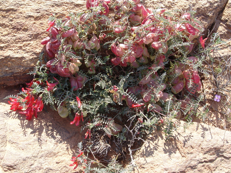 Southern Africa's amazing indigenous medicinal plants have been ...